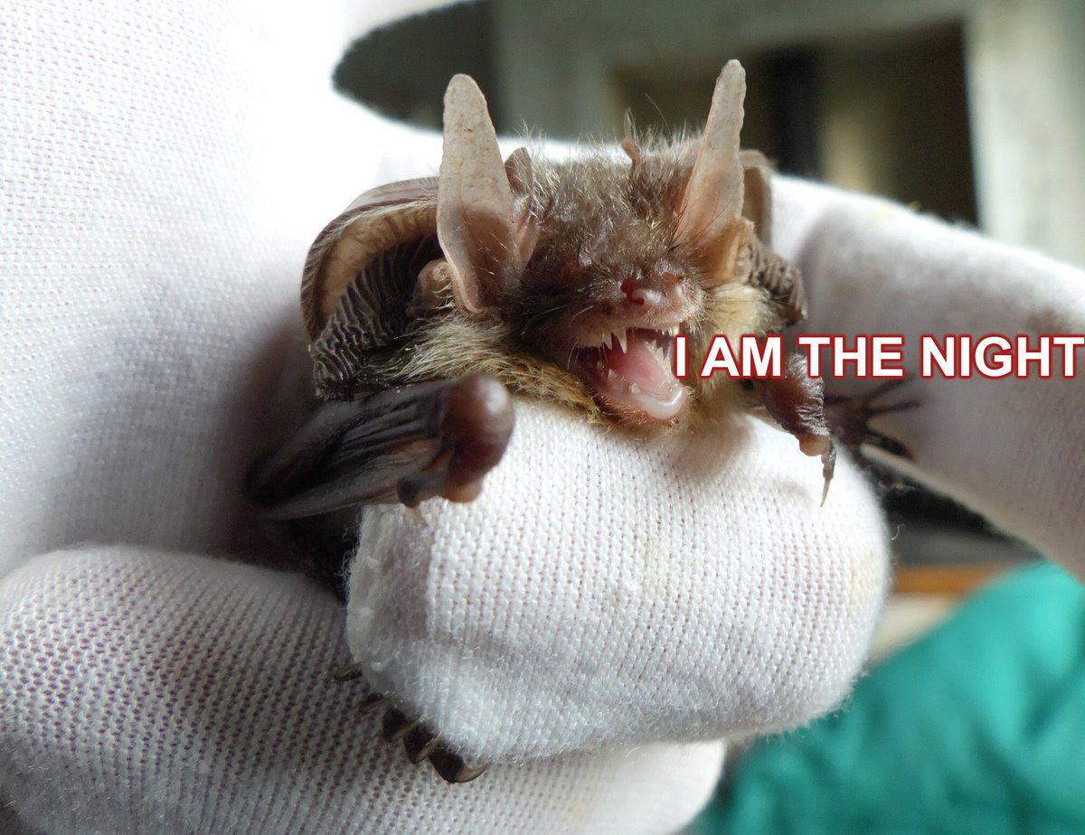 library bat